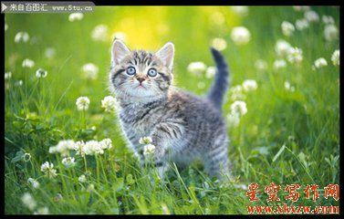小花猫的自述