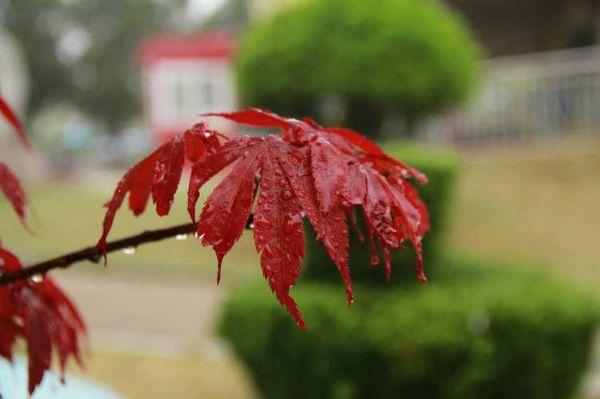 雨后的午后