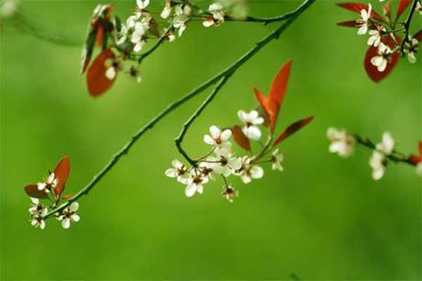 星空,一树繁华一束光
