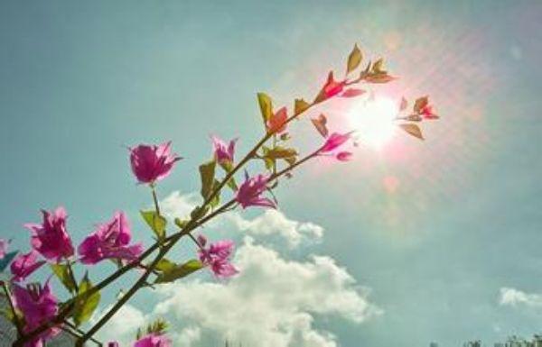 有梦想,在哪里都能开花