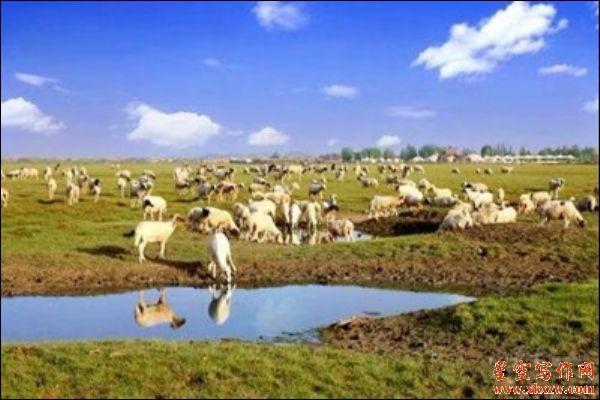 西北游记 内蒙古通湖草原